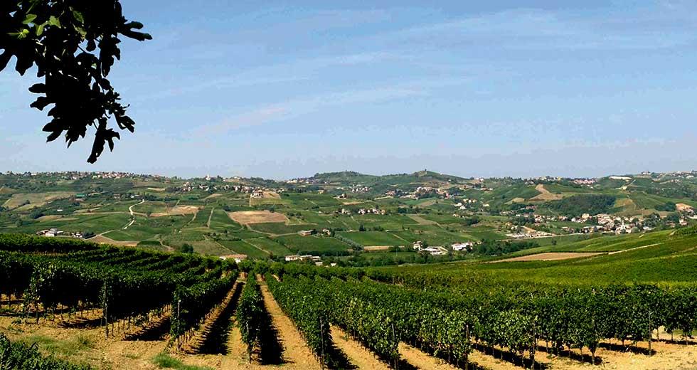 Belcredi Wine